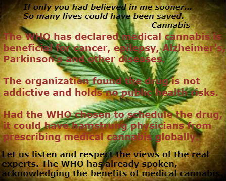 Medical Marijuana Pros and Cons: Expert Opinions